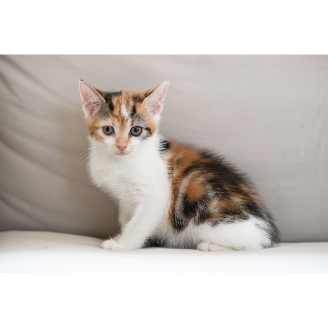 Photo of Cristal