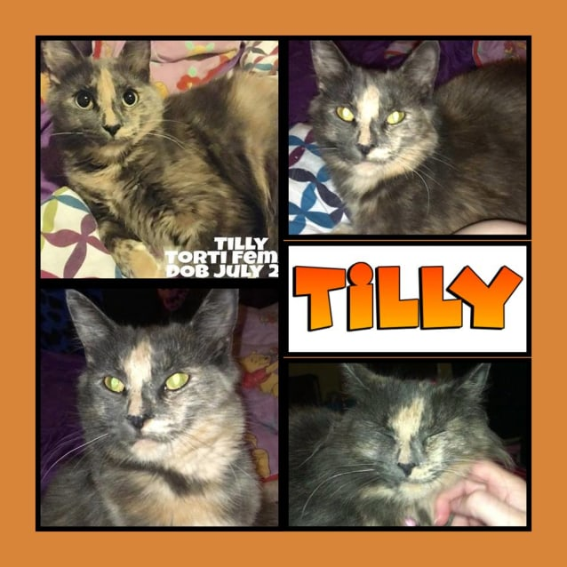 Photo of Tilly The Shy Torti