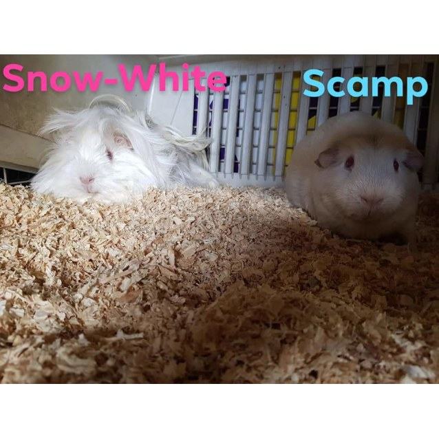 Photo of Snow White And Scamp