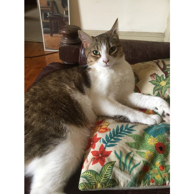 Photo of Miss Molly (Located In Footscray)