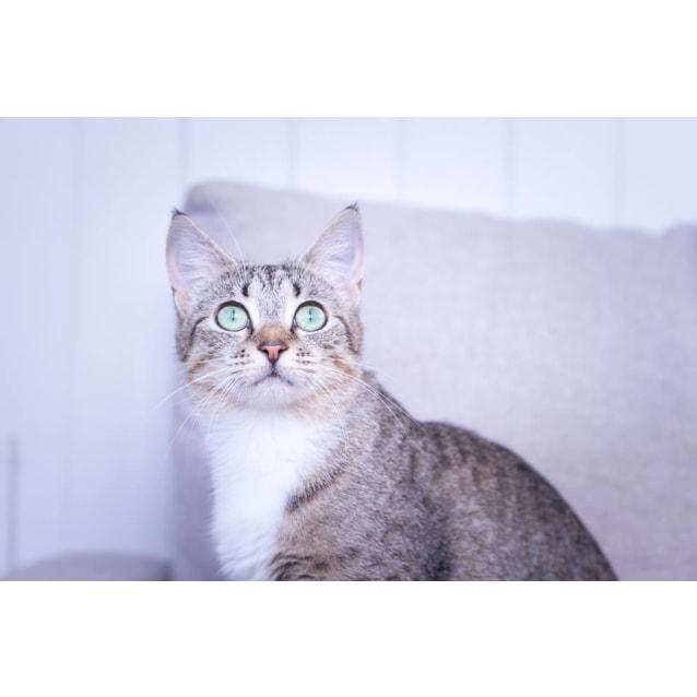 Photo of Hershey