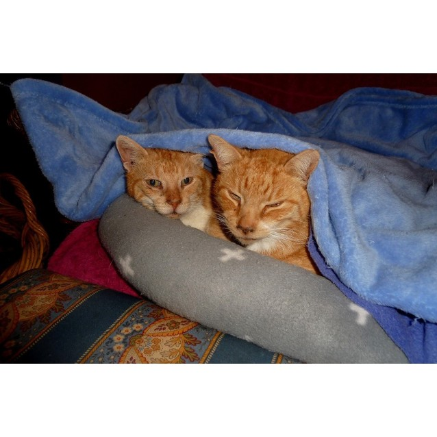 Photo of Killian And Nidge