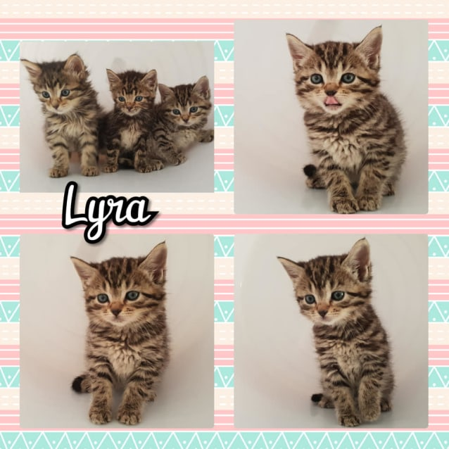 Photo of Lyra