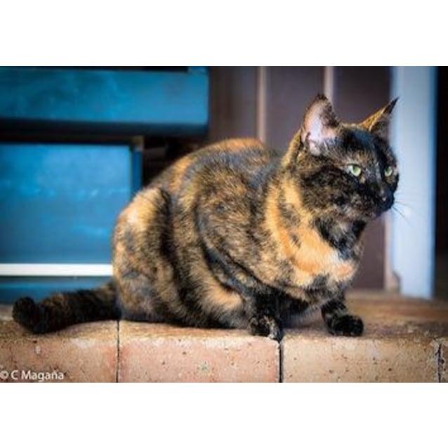 Photo of Mama Cat