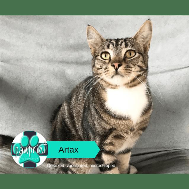 Photo of Artax