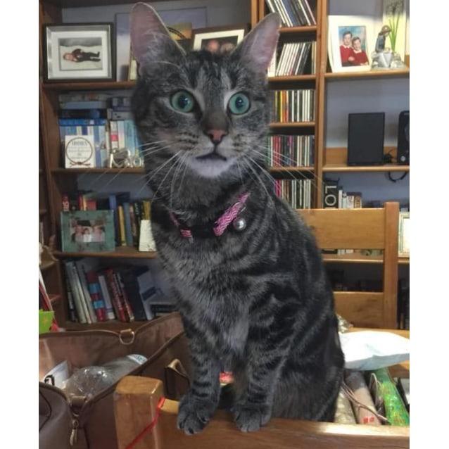 Photo of Ella