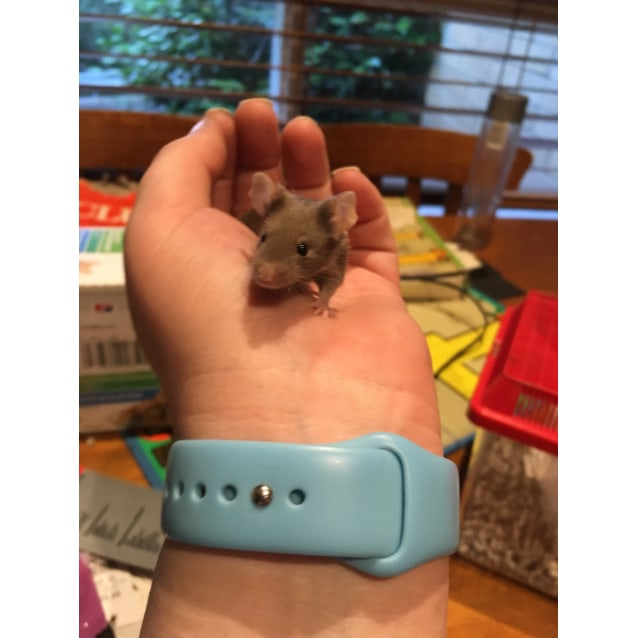 Photo of Young Female Mice
