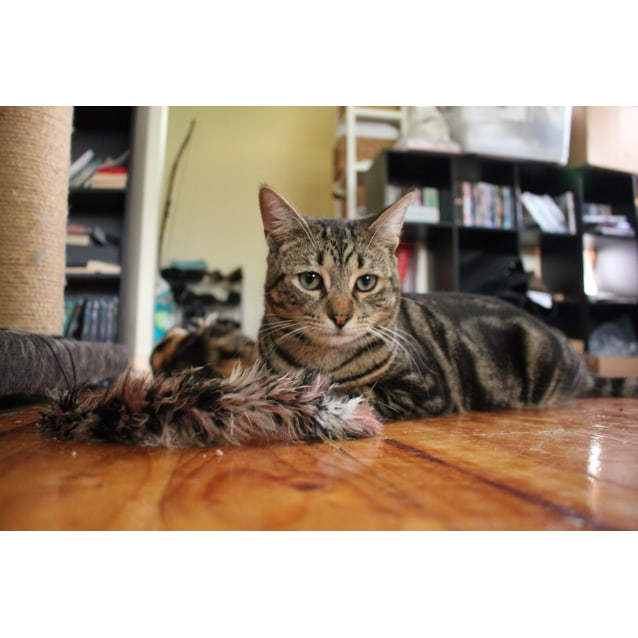 Photo of Axton (Located In Elsternwick)