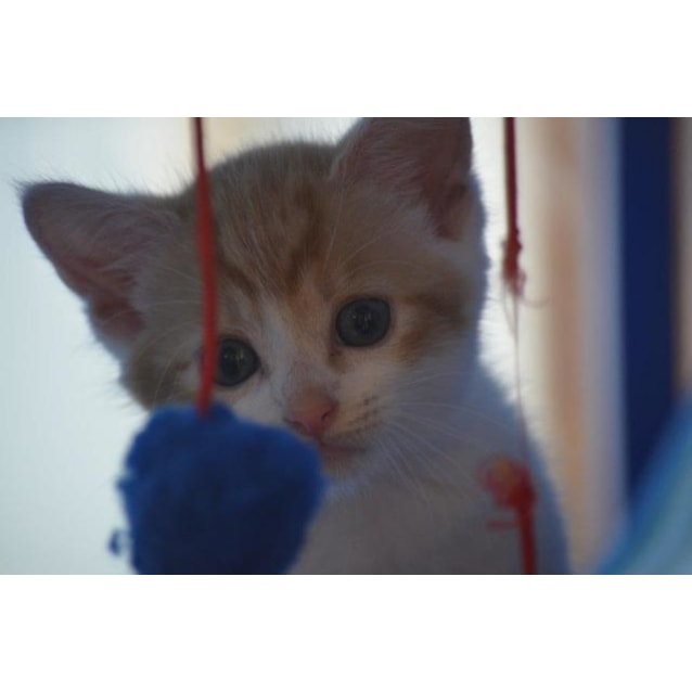 Photo of Ernie