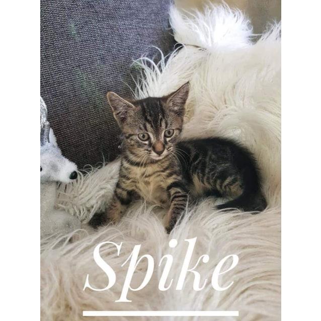 Photo of Spike