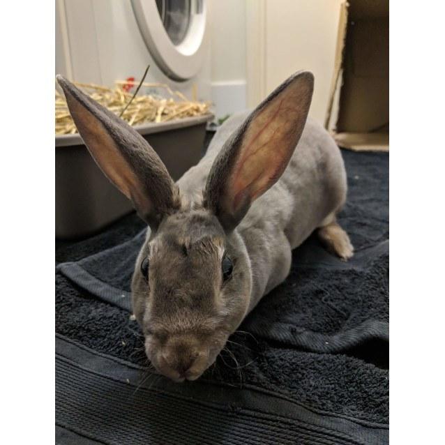 Photo of Lulu **On Trial**