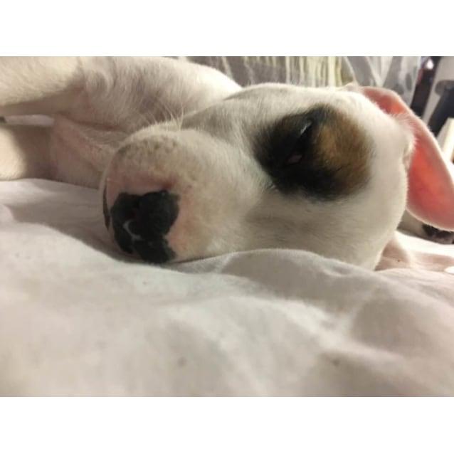 Photo of Juno