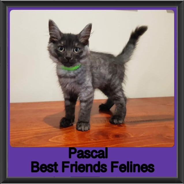 Photo of Pascal