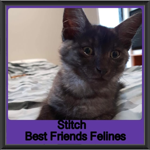 Photo of Stitch