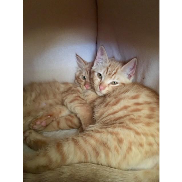 Photo of Nina & Gizmo