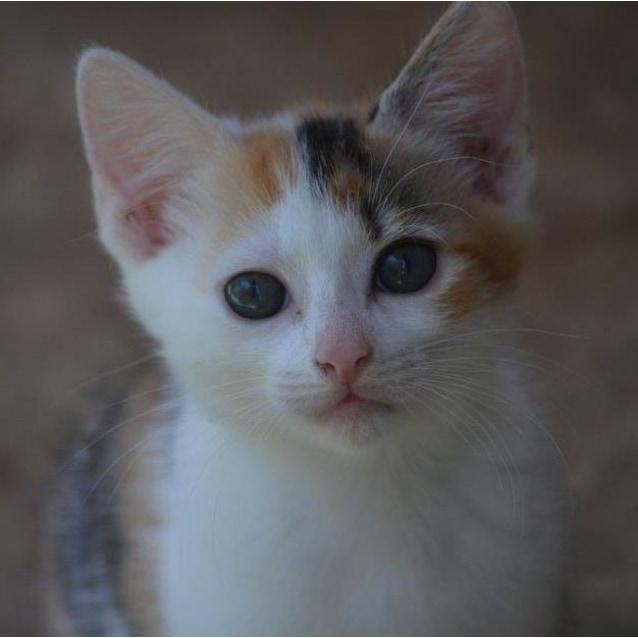 Photo of Eleez
