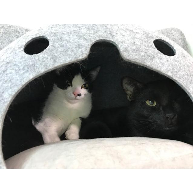 Photo of Mr. Knightly&Panda