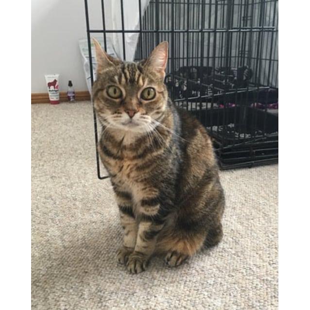 Photo of Pretty Kitty