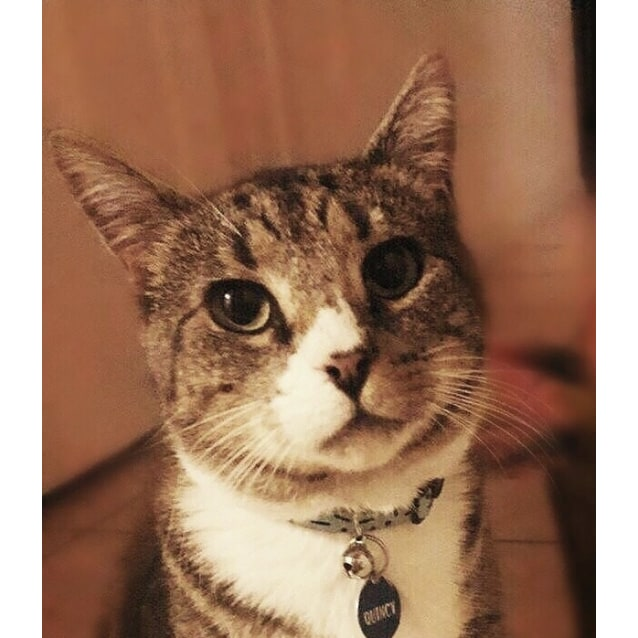 Photo of Quincy