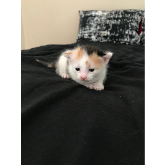 Photo of Sumi