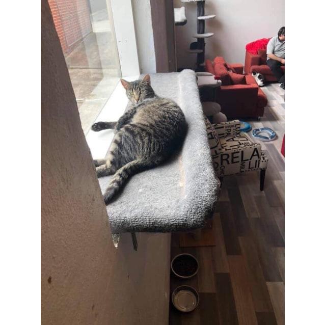 Photo of Opal    Meet Me At Cat Lounge   Neko Hq Preston