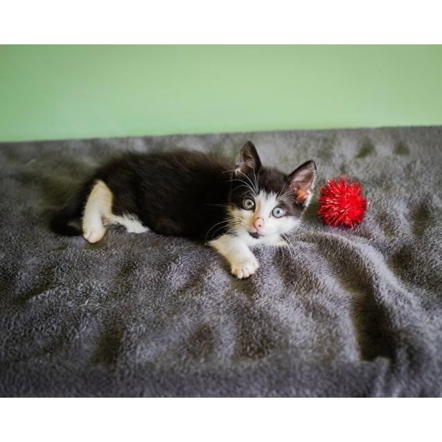 Photo of Kitty Named Binky