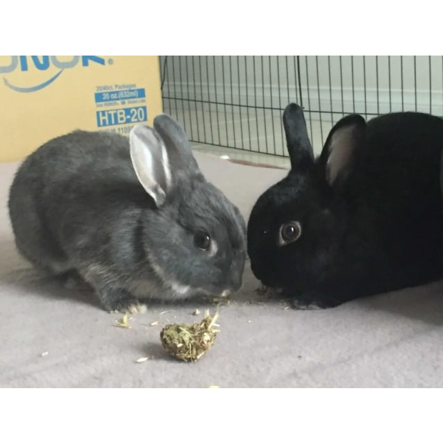 Photo of Coco And Midnight