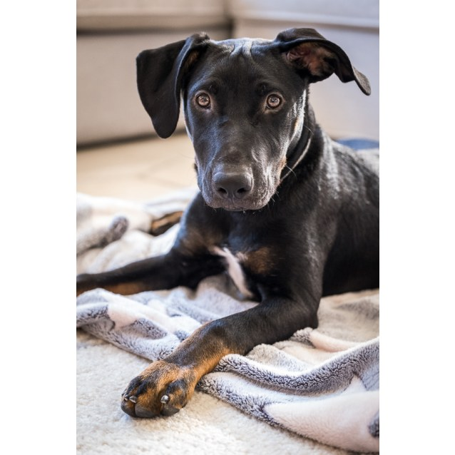 Photo of Sierra **Adopted**