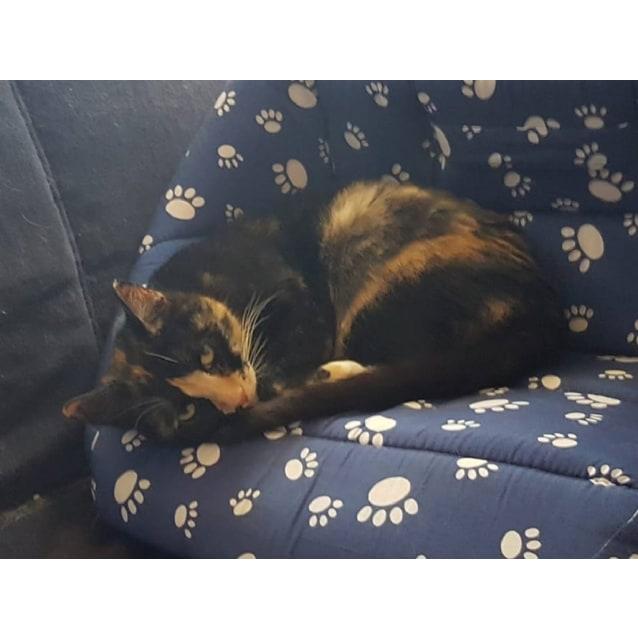 Photo of Viola