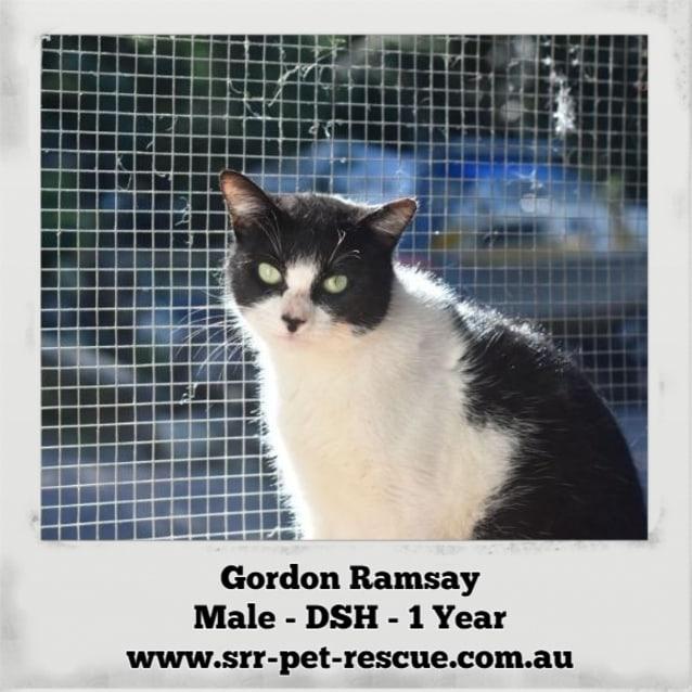 Photo of Gordon Ramsay