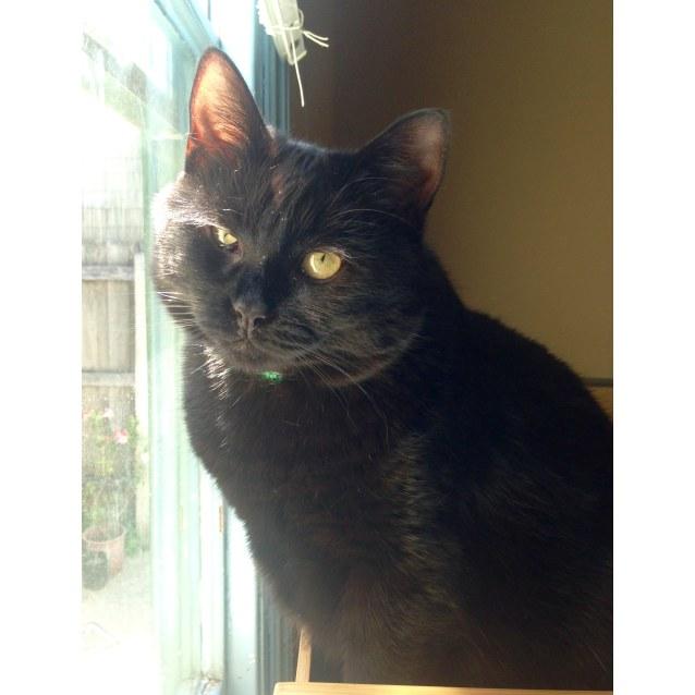 Photo of Sacha