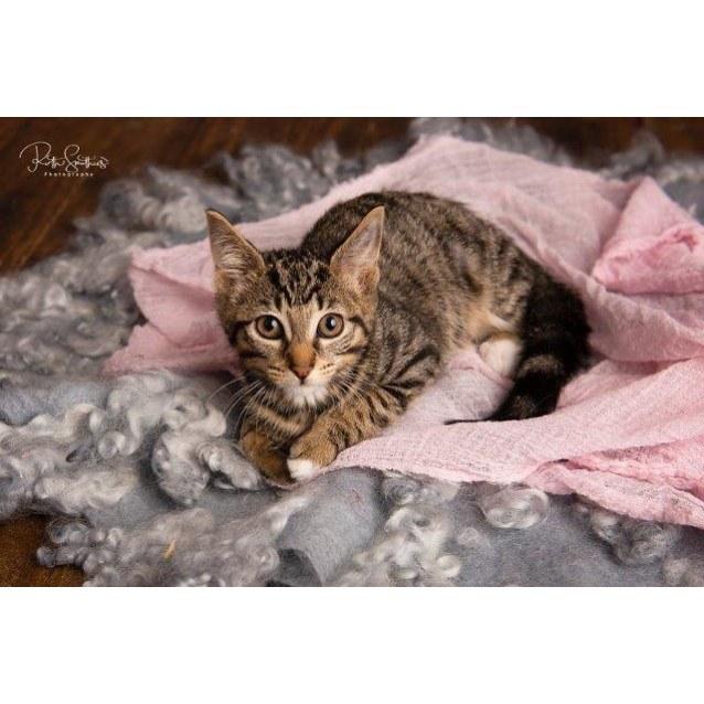 Photo of Tilli