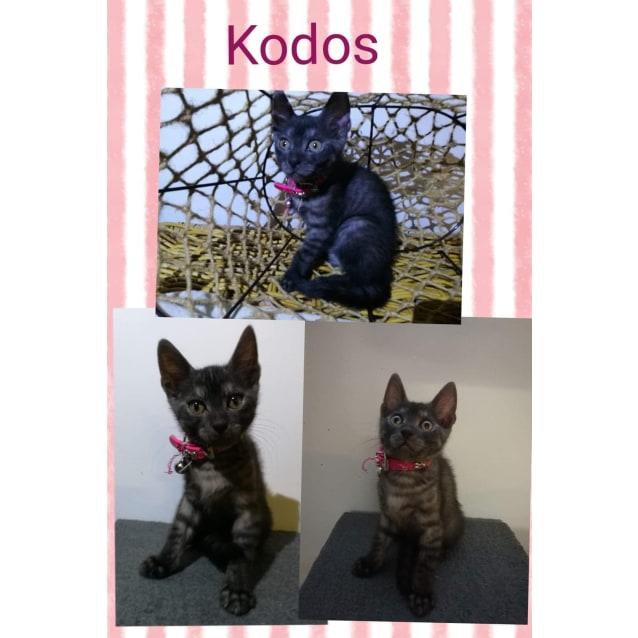 Photo of Kodos