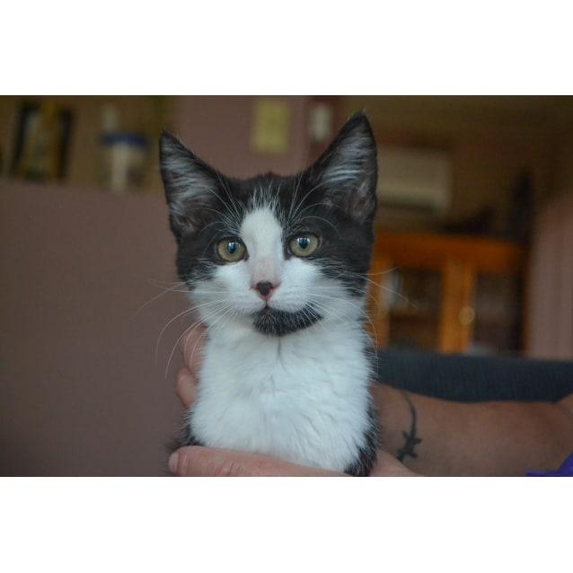 Photo of Mona