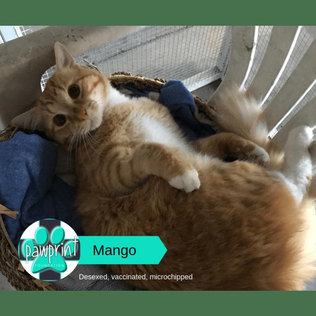 Photo of Mango & Bono