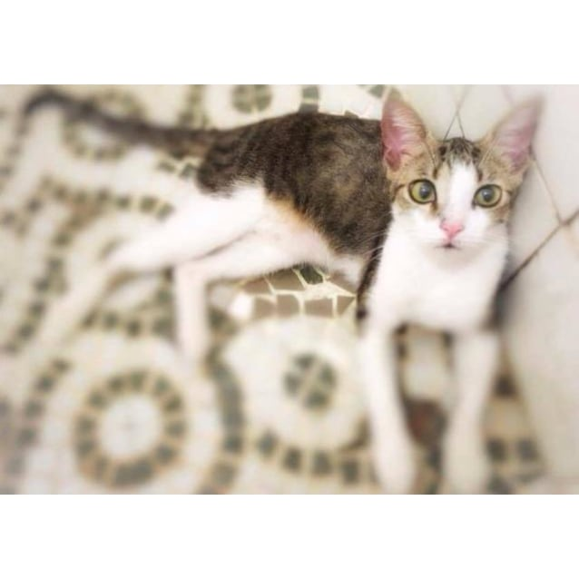 Photo of Mischief