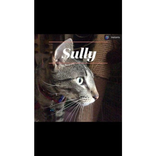 Photo of Sully