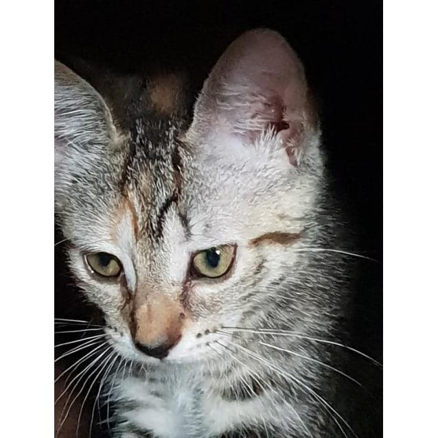 Photo of Tuff