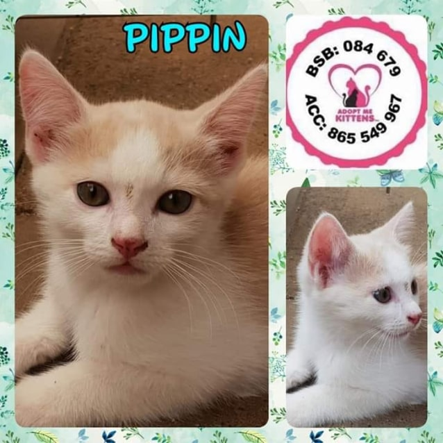 Photo of Pippin