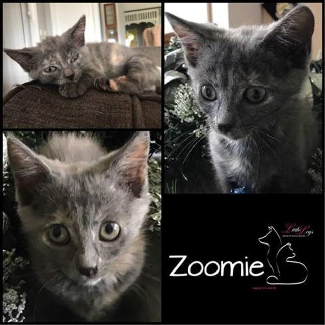 Photo of Zoomie