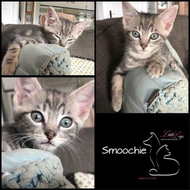 Photo of Smoochie