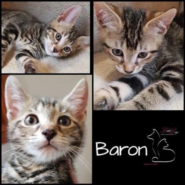 Photo of Baron