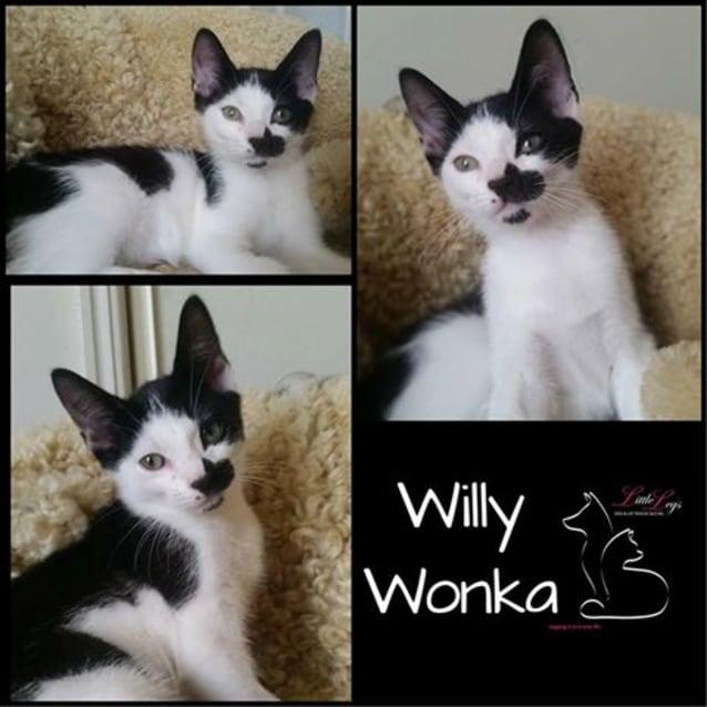 Photo of Willy Wonka