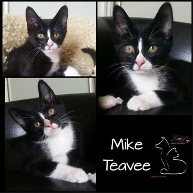 Photo of Mike Teavee