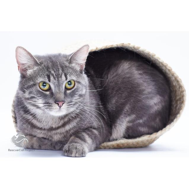 Photo of Stevie (The Wondercat)
