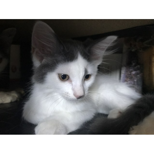 Photo of Duke