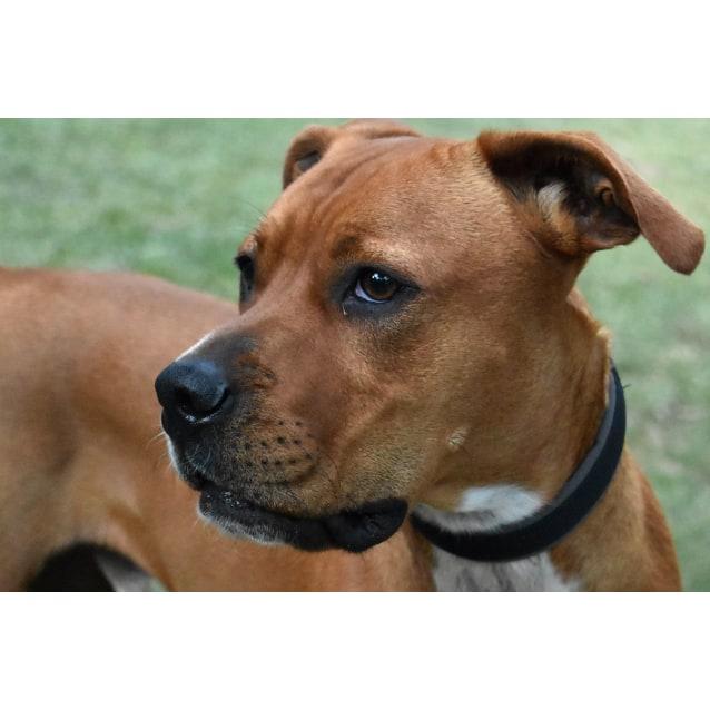 Photo of Dexter