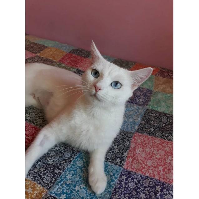 Photo of Livia