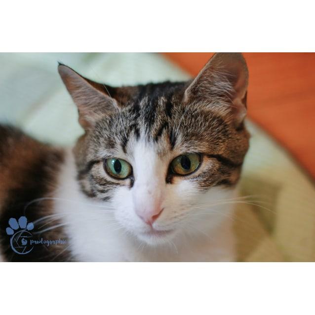 Photo of Sunny