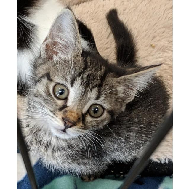 Photo of Susie